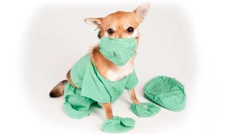 Diseases You Can Get From Dog Feces And Urine